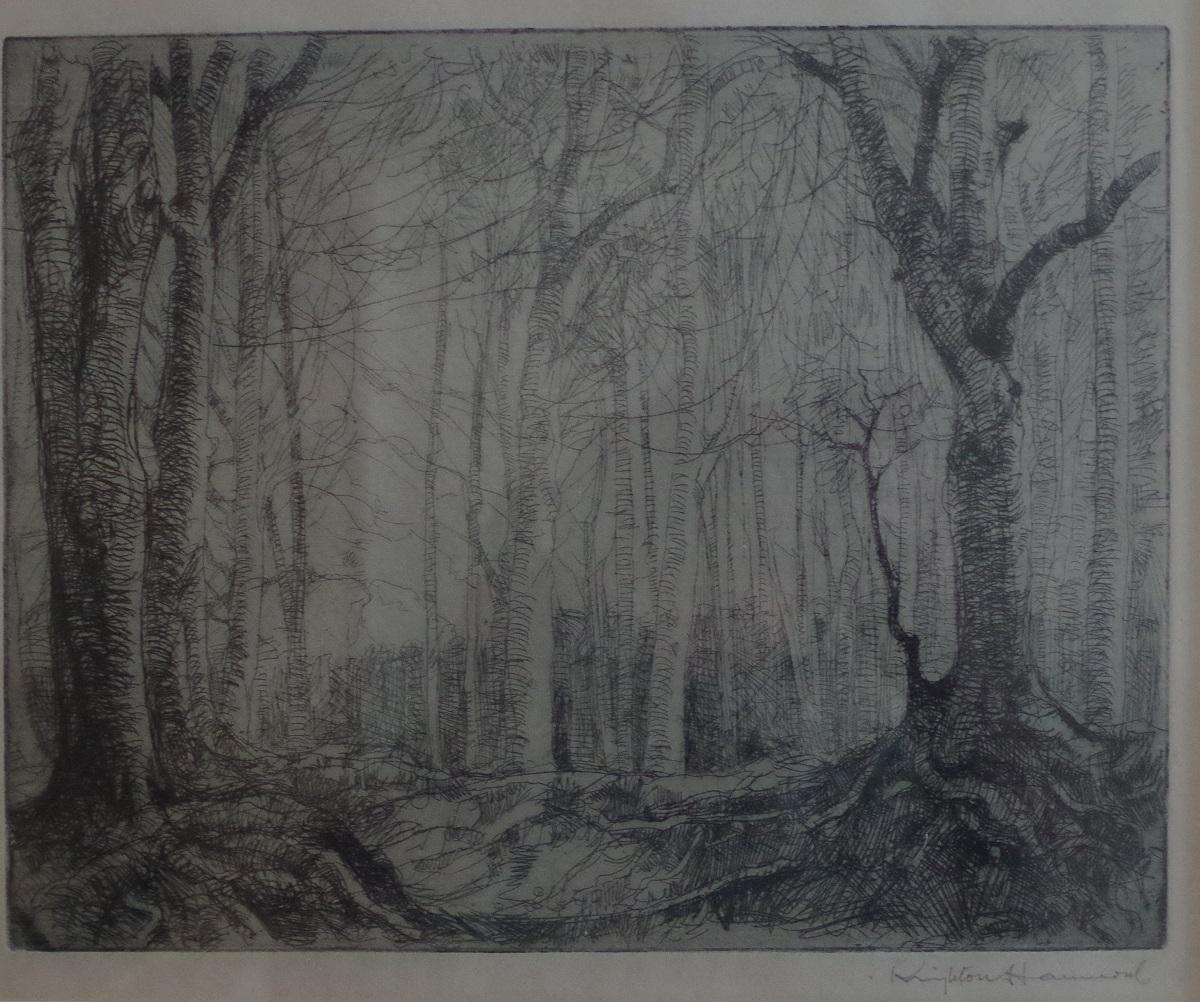 Sussex Woodland